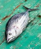 Tunafish op dek van boot stock foto's