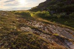 Tundra το πολικό καλοκαίρι στο ηλιοβασίλεμα, ακτή της θάλασσας Barents, χερσόνησος κόλα, Ρωσία στοκ φωτογραφία