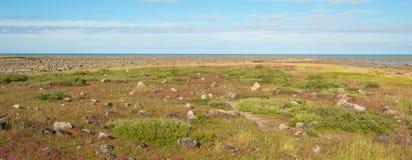 Tundra άποψη Στοκ φωτογραφίες με δικαίωμα ελεύθερης χρήσης