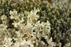 tundra βρύου Στοκ εικόνες με δικαίωμα ελεύθερης χρήσης