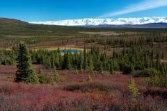 Tundra κοντινή θέση για κατασκήνωση λιμνών κατάπληξης, Denali Στοκ Εικόνες