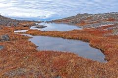Tundra λίμνες στην υψηλή Αρκτική στοκ εικόνα
