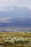 tundra λουλουδιών άγρια περι& Στοκ Φωτογραφία
