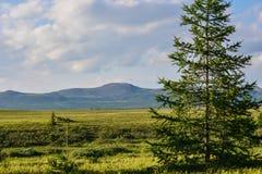Tundra λόφων στοκ εικόνες με δικαίωμα ελεύθερης χρήσης