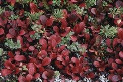tundra της Αλάσκας στοκ εικόνα
