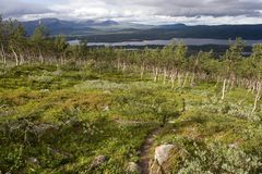 tundra τοπίων Στοκ Φωτογραφία