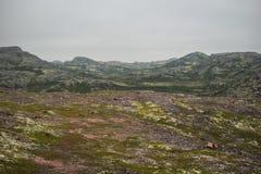 tundra Στοκ φωτογραφίες με δικαίωμα ελεύθερης χρήσης