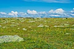 Tundra Royalty Free Stock Photography