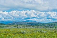 Tundra Stock Image