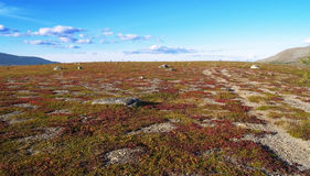 Tundra. Photo. Tundra. Blue sky. Mountains. Different colors in the tundra Stock Photos