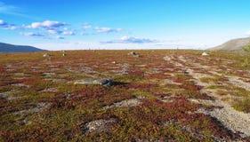 tundra Στοκ Φωτογραφίες