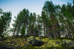 tundra royalty-vrije stock foto's