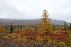 tundra stock foto's