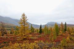 tundra stock afbeeldingen