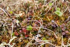 tundra stock fotografie