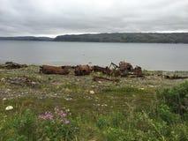 tundra royalty-vrije stock fotografie
