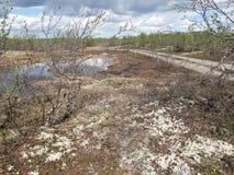 tundra στοκ εικόνα