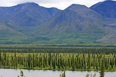 Tundra of Alaska Royalty Free Stock Photo