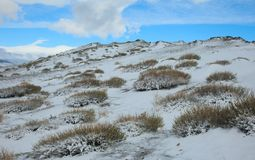 Tundra alpestre fotos de archivo libres de regalías