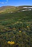 Tundra alpestre en el paso de Guanella Imagenes de archivo
