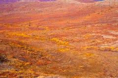 Tundra alpina fotografia stock libera da diritti