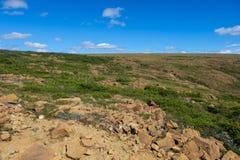 Tundra alpina rochosa Foto de Stock Royalty Free