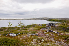 The tundra in the Arctic Circle Stock Images