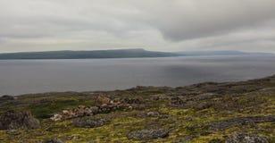 tundra Barents hav Liggande med en sten i vattnet eftermiddagen har kareliyaen sedda för natten för den russia north sunen storme Arkivfoto