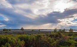 Tundra. stock photography