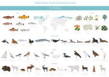 Free Tundra Biome. Terrestrial Ecosystem World Map. Arctic Animals, Birds, Fish And Plants Infographic Design Stock Photo - 137929000