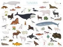 Tundra biome. Terrestrial ecosystem world map. Arctic animals, birds, fish and plants infographic design. Vector illustration royalty free illustration