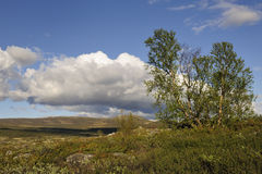 Tundra with birches Royalty Free Stock Photo