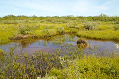 Tundra Bog. View on the colorful swamplands of the arctic tundra of Hudson Bay, Manitoba, Canada Stock Photos