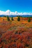 Tundra cloud trees Stock Photography