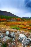 Tundra cloud trees Royalty Free Stock Photo