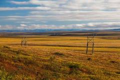 Tundra colorida del otoño Fotografía de archivo