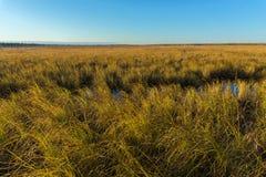 Tundra de Autumn Landscape Fotos de archivo