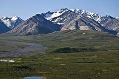 Tundra de Denali Fotos de archivo
