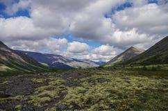 Tundra de la montaña con los musgos y las rocas cubiertos con los liquenes, Hibi Foto de archivo libre de regalías