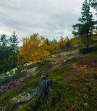 Tundra del otoño Fotos de archivo