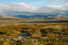 Tundra del verano Foto de archivo libre de regalías