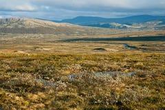 Tundra del verano Imágenes de archivo libres de regalías