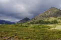 Tundra della montagna con i muschi e le rocce coperti di licheni, Hibi Fotografia Stock
