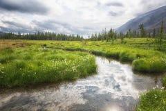 Tundra di estate Urals polari immagini stock libere da diritti