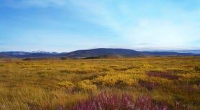 Tundra di lusso nella bellezza di autunno delle montagne Fotografia Stock
