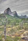 Tundra e montanhas norueguesas Imagens de Stock