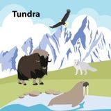 Tundra Eco style life forest Wildlife. Vector illustrations  Eco style life forest Wildlife Forest Stock Photos