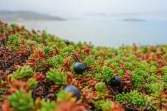 Tundra ed oceano Fotografia Stock Libera da Diritti