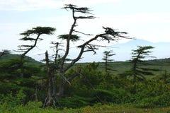 Tundra en Eurasia, niebla, verano fotos de archivo