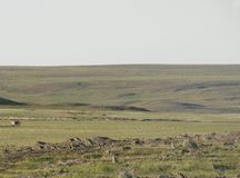 Tundra en la estación de verano fotografía de archivo